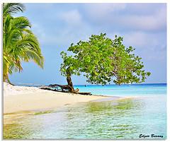 vene-beach